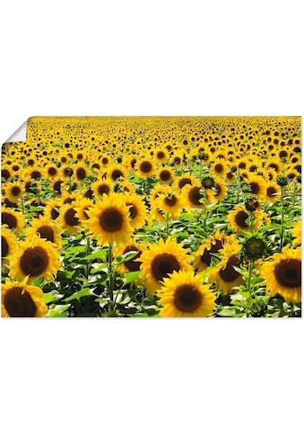 Artland Wandbild »Sonnenblumenfeld«, Blumen, (1 St.), in vielen Grössen & Produktarten... kaufen