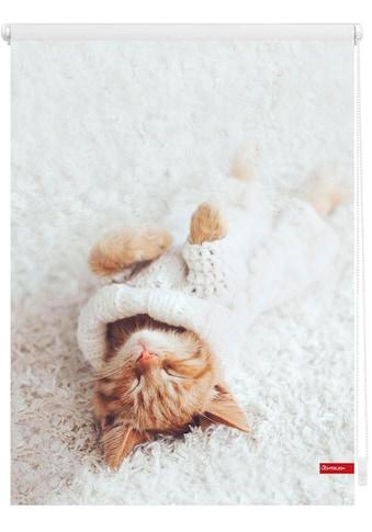 Seitenzugrollo »Klemmfix Digital Sleepy Cat«, LICHTBLICK, verdunkelnd, ohne Bohren, freihängend kaufen