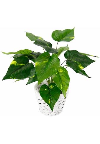 Kunstpflanze »Pothospflanze in Wasserhyazinthentopf« (1 Stück) kaufen