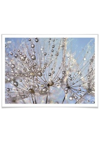 Wall-Art Poster »Wassertropfen Pusteblume«, Blumen, (1 St.) kaufen
