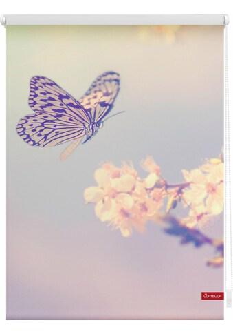 LICHTBLICK Seitenzugrollo »Klemmfix Motiv Schmetterling«, Lichtschutz, ohne Bohren, freihängend, bedruckt kaufen
