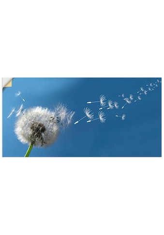 Artland Wandbild »Pusteblume«, Blumen, (1 St.), in vielen Grössen & Produktarten -... kaufen