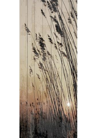 QUEENCE Holzbild »Schilf Sonnenuntergang«, 80x40 cm Echtholz kaufen
