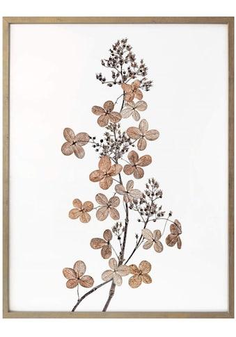 Wall-Art Poster »Hortensie«, Blumen, (1 St.) kaufen