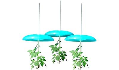 KHW Set: Pflanzenschutzdach »Tomatenhut Basis«, 3 Stk., ØxHöhe: 49x7 cm, inkl. 3 Schläuchen kaufen
