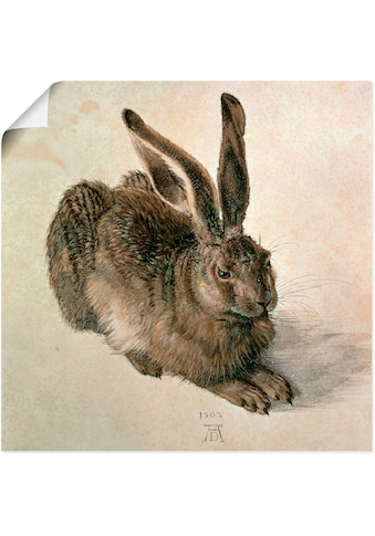 Artland Wandbild »Junger Feldhase. 1502«, Wildtiere, (1 St.), in vielen Grössen &... kaufen