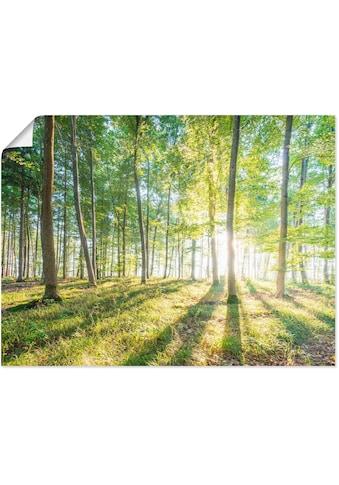 Artland Wandbild »Sonnenaufgang im Wald«, Wald, (1 St.), in vielen Grössen &... kaufen
