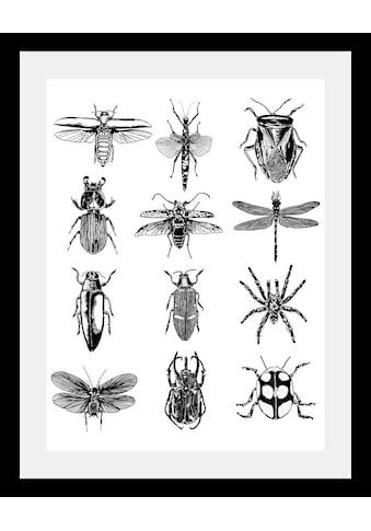 queence Bild »Insekten«, in 3 Grössen, gerahmt kaufen