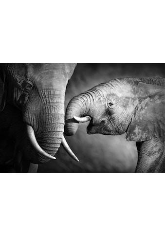 queence Leinwandbild »Elefant« kaufen