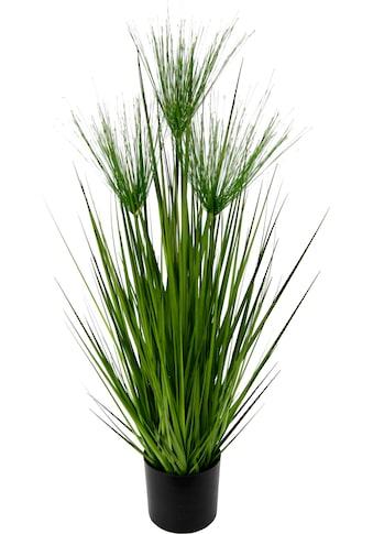 Kunstpflanze »Zyperngras im Topf« (1 Stück) kaufen