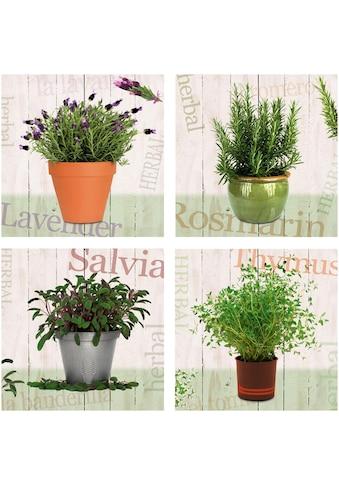 Home affaire Leinwandbild »Lavendel, Rosmarin, Salbei, Thymian« (Set) kaufen
