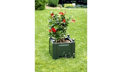 Pflanzkasten grün, 43 cm kaufen