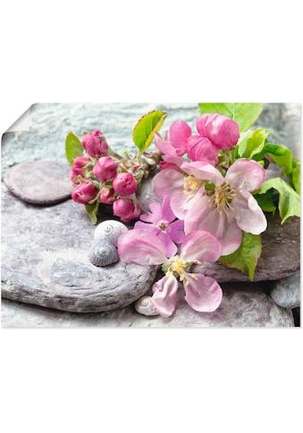 Artland Wandbild »Apfelblüten«, Blumen, (1 St.), in vielen Grössen & Produktarten -... kaufen
