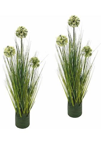 Kunstpflanze »Grasbusch Allium 62 cm«« (Set, 2 Stück) kaufen