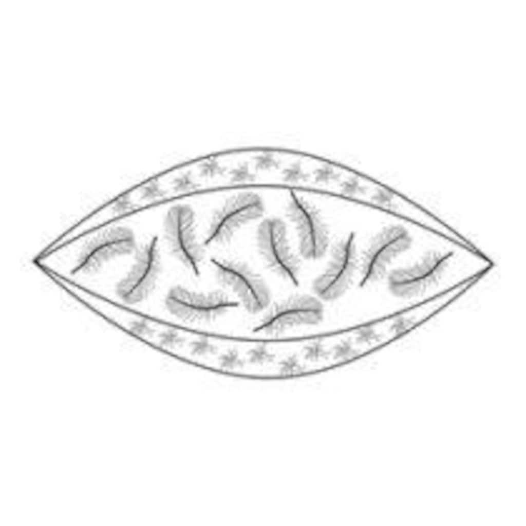billerbeck 3-Kammer-Kopfkissen »Duplo Deep 150«, Füllung: Aussen: 100% neue, reine, europäische, besonders grossflockige Gänsedaunen, weiss, VSB-Norm Kern: 100% neue, reine, europäische Gänsefederchen, weiss, Bezug: 100% Baumwolle, (1 St.)