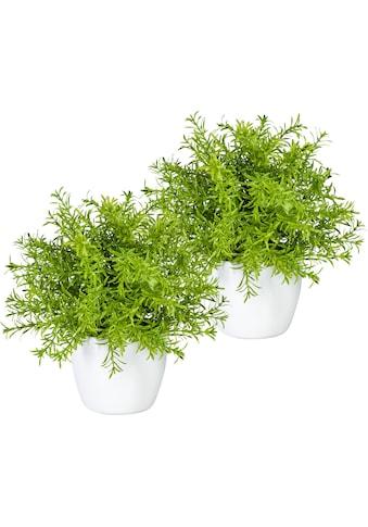 my home Künstliche Zimmerpflanze »Mikail«, 2er Set kaufen
