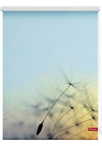 LICHTBLICK Seitenzugrollo »Klemmfix Motiv Pusteblume«, Lichtschutz, ohne Bohren, freihängend, bedruckt kaufen