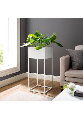 elbgestoeber Pflanzschale »elbflora« kaufen