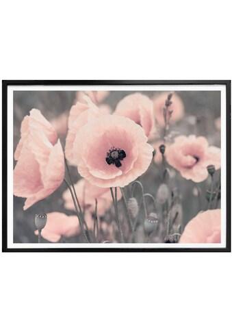 Wall-Art Poster »Rosa Mohnblume«, Blumen, (1 St.) kaufen