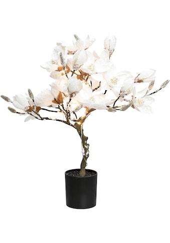 LED Baum »Magnolie«, Warmweiss, beschneit, Höhe ca. 58 cm, mit 20 LEDs kaufen
