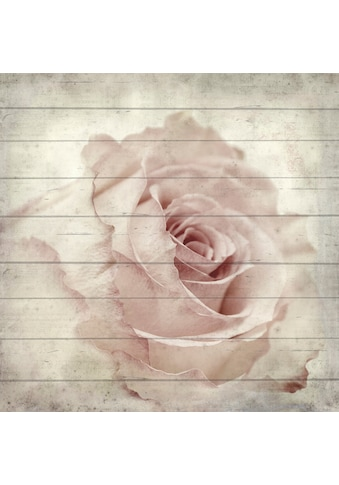 QUEENCE Holzbild »Zarte Rose«, 40x40 cm Echtholz kaufen