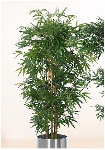 Schneider Kunstpflanze »Bambusbaum« kaufen