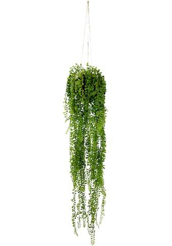 I.GE.A. Kunstpflanze »Seneciohänger«, Mit Hängeampel kaufen