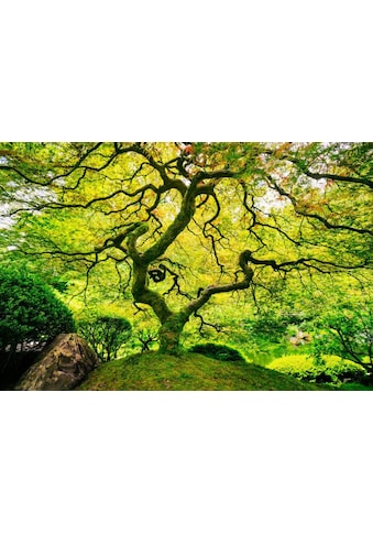 Home affaire Fototapete »Japanese Maple Tree« kaufen