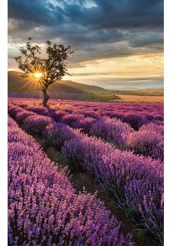 Vliestapete »Lavendelblüte in der Provence«, kaufen
