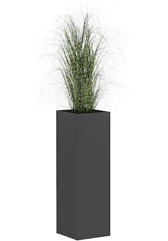 Schildmeyer Blumenkasten »Serie 1500« kaufen