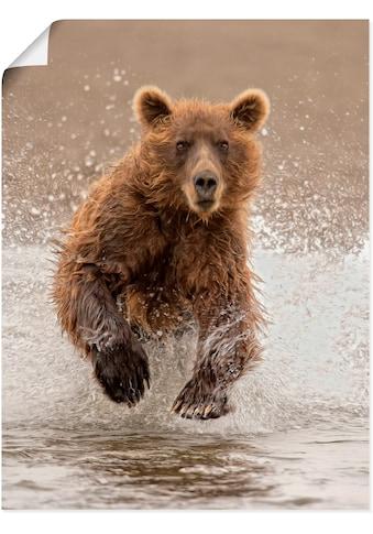 Artland Wandbild »Bären beim Spielen II« kaufen