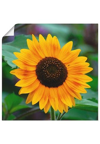 Artland Wandbild »Sonnenblume«, Blumen, (1 St.), in vielen Grössen & Produktarten -... kaufen