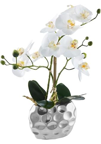 Leonique Kunstorchidee »Orchidee« (1 Stück) kaufen