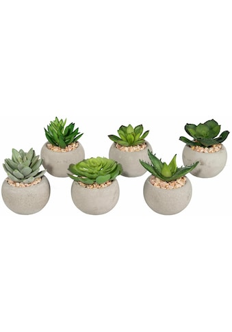 Creativ green Kunstpflanze »Sukkulenten« (Set, 6 Stück) kaufen