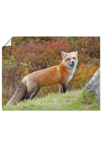 Artland Wandbild »Fuchs I«, Wildtiere, (1 St.), in vielen Grössen & Produktarten... kaufen