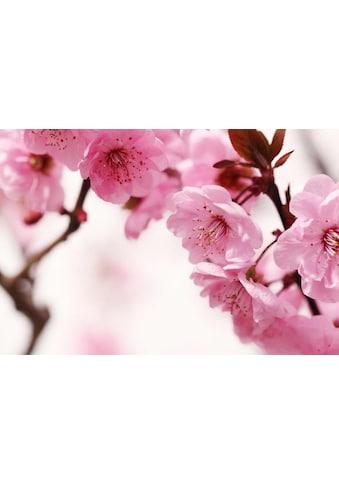 Home affaire Fototapete »Peach Blossom«, 350/260 cm kaufen