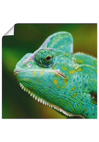 Artland Wandbild »Jemenchamäleon Portrait«, Reptilien, (1 St.), in vielen Grössen &... kaufen