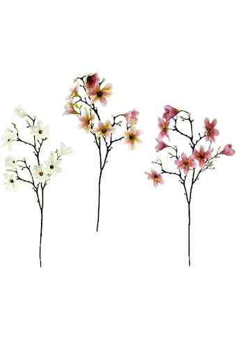 I.GE.A. Kunstblume »Magnolienzweig«, 3er Set kaufen