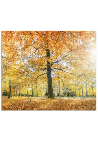 Artland Küchenrückwand »Herbstwald Panorama«, selbstklebend in vielen Grössen -... kaufen