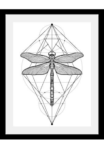 queence Bild »Libelle«, in 3 Grössen, gerahmt kaufen