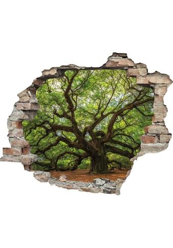 queence Wandtattoo »Baum« (1 Stück) kaufen