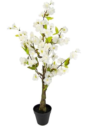 I.GE.A. Kunstbaum »Kirschblütenbaum«, Im Topf kaufen