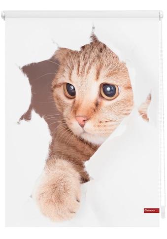 Seitenzugrollo »Klemmfix Digital Katze«, LICHTBLICK, verdunkelnd, ohne Bohren, freihängend kaufen