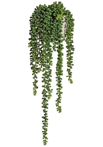 Creativ green Kunstranke »Sedumhänger«, im Zementtopf kaufen