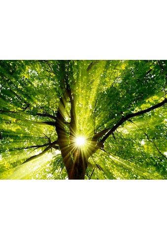 Home affaire Leinwandbild »smileus: Sonne strahlt explosiv durch den Baum«, 70/50 cm kaufen