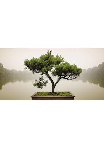 Home affaire Glasbild »Panom: Chinesischer Bonsaibaum« kaufen