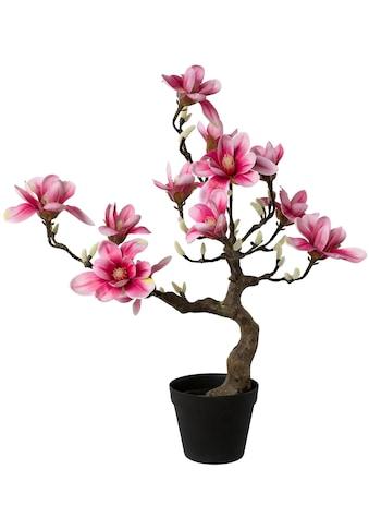 Creativ green Kunstpflanze »Magnolienbaum«, im Kunststofftopf kaufen