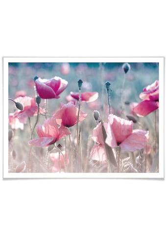 Wall-Art Poster »Mohnblumen Wiese«, Blumen, (1 St.) kaufen