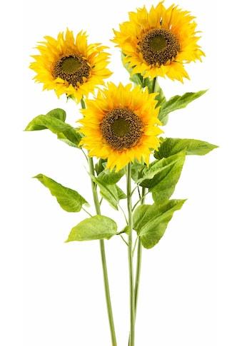 Creativ green Kunstblume »XL« (3 Stück) kaufen
