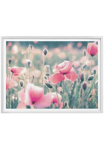 Wall-Art Poster »Mohnblumen«, Blumen, (1 St.) kaufen